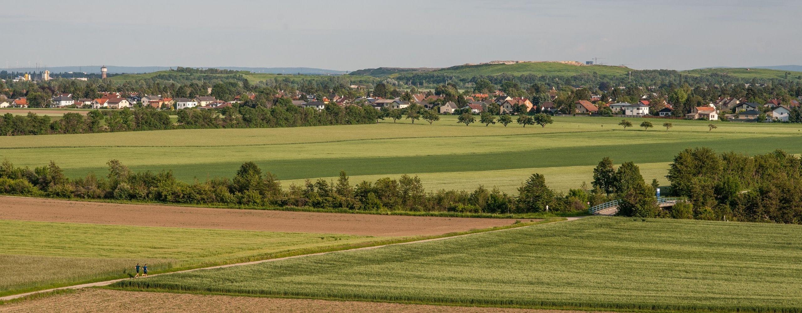 Felder im Regionalpark DreiAnger, © Stadt Wien/Gerd Götzenbrucker