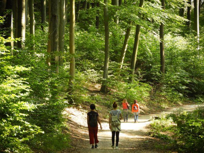 Wanderinnen am Stadtwanderweg im Wiener Wald (© MA49/Christian Fürthner)